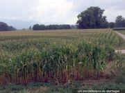 Titelbild Zwangsversteigerung Landwirtschaftsflächen