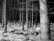 zwei Waldflächen