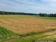 landwirtschaftlich genutztes Grundstück
