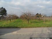 Landwirtschaftsfläche (Obstwiese)