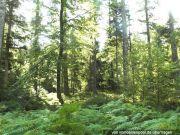 drei Waldflächen