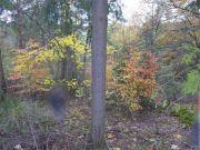 Titelbild Zwangsversteigerung Waldfläche