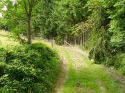 Titelbild Zwangsversteigerung Wald- und Landwirtschaftsflächen