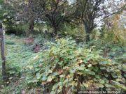 Titelbild Zwangsversteigerung Grünfläche mit Obstbäumen und Sträuchern