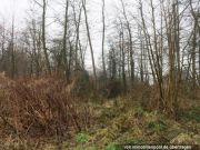 Titelbild Zwangsversteigerung unbebautes Waldgrundstück