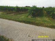 Titelbild Zwangsversteigerung vier Weinbauflächen