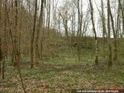 Wald-/Brachlandfläche