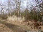 Titelbild Zwangsversteigerung vier Feld-, Wald-, Wiesenflächen