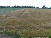 Titelbild Zwangsversteigerung 4 Landwirtschaftsflächen