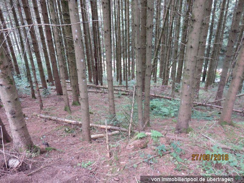 Zwangsversteigerung mehrere Wald- und Landwirtschaftsflächen