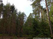 Titelbild Zwangsversteigerung eine Wald- und zwei Landwirtschaftsflächen