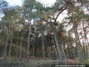 unbebautes Waldgrundstück