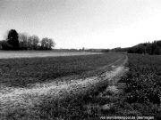 mehrere Landwirtschafts-/Waldflächen