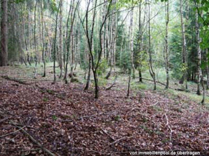 Zwangsversteigerung Waldfläche FlSt. 62