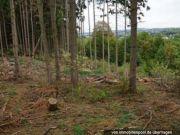 Titelbild Zwangsversteigerung Waldfläche FlSt. 57