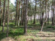Waldgrundstück