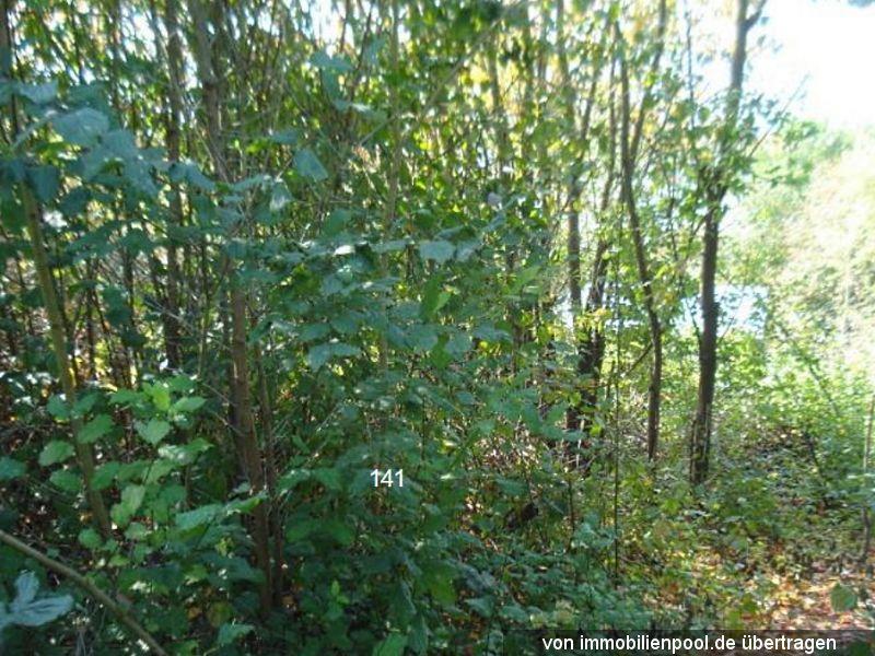 Zwangsversteigerung 4 Waldflächen
