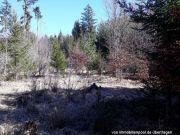 Titelbild Zwangsversteigerung Wald