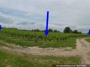 zwei Weingärten