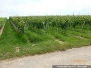 Titelbild Zwangsversteigerung Weingarten