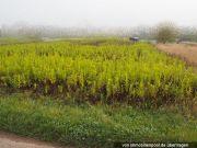 2 unbebaute Landwirtschaftsflächen