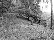 unbebautes Grundstück (Waldfläche)