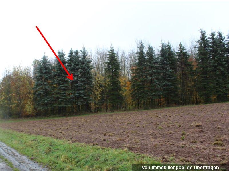 Zwangsversteigerung mehrere Waldflächen