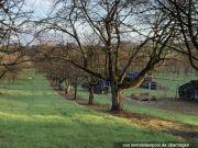 Bild zu Obstbaumwiese
