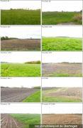 Landwirtschaftsflächen